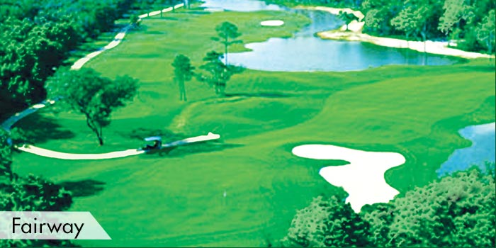 Peninsula Golf Club Fairway