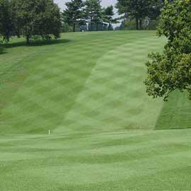Play Golf at Fairway